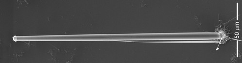 This new technique for growing microwires can produce strands that are very long in relation to their diameter. The rounded 'cap' at the wire's top is a droplet of molten copper, while the wire itself is pure silicon. Image courtesy of Tonio Buonassi