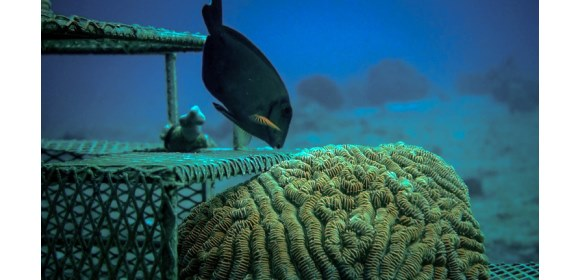Vicor-CCell-Renewables-coral-reef-fish_580x280